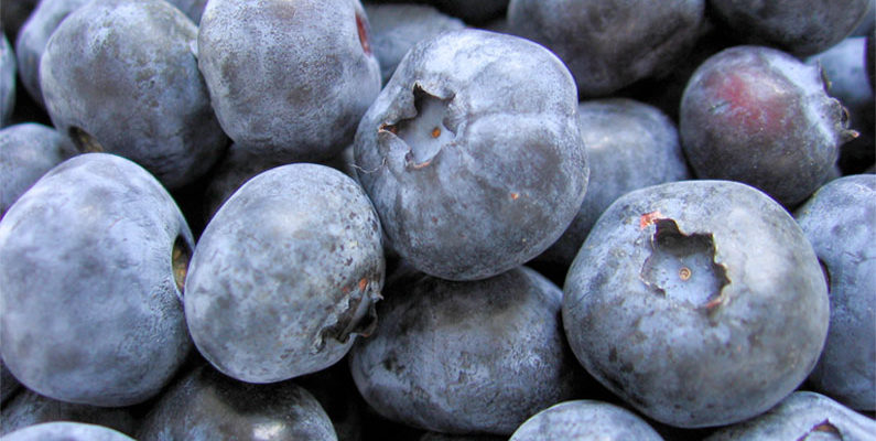 CiderCraft Magazine: 5 Blueberry Infusions to Kick-off the Upcoming Summer post image